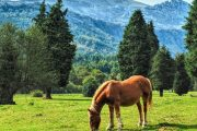 Parque natural de Gorbeia - Viajes Iverem